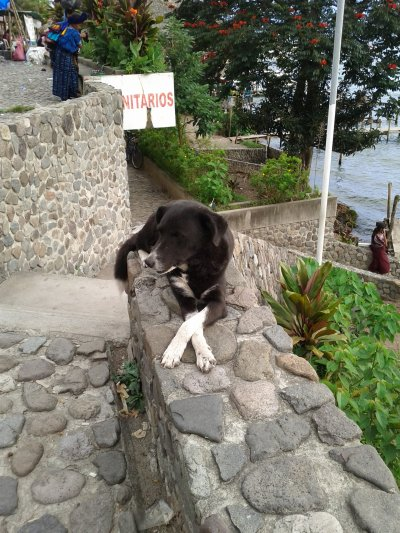 A very relaxed dog in Guatemala